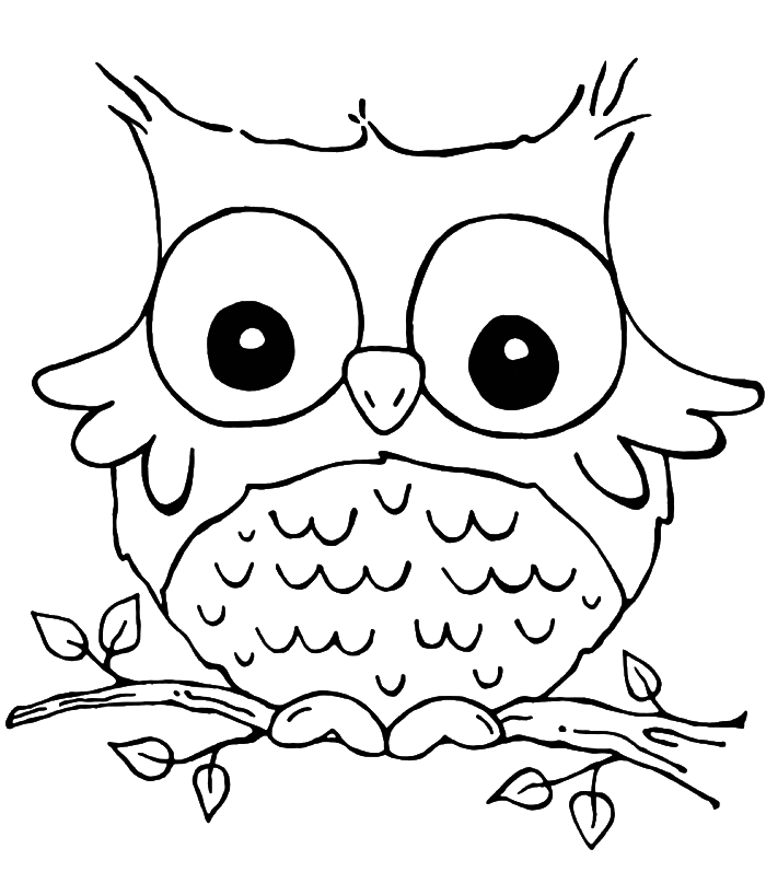 colouring owl nocturnal bird owl coloring pages 34 pictures cartoon clip colouring owl