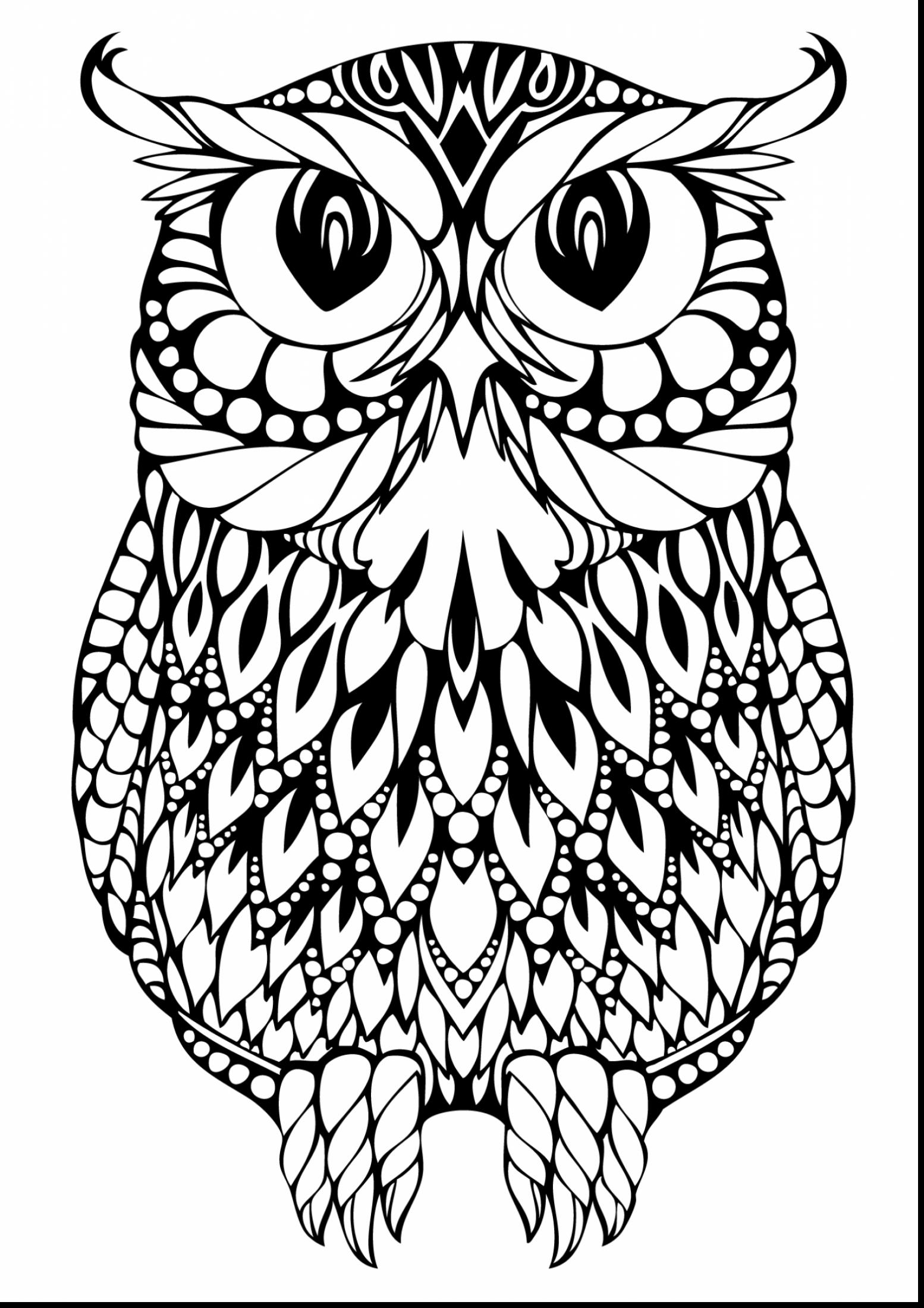 colouring owl owl drawing cute at getdrawings free download colouring owl