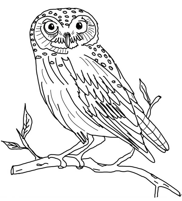 colouring owl the little owl coloring page download print online owl colouring