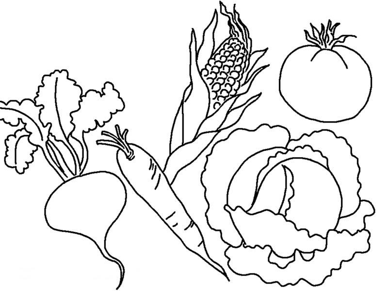 colouring pages of vegetables coloring page vegetables from the garden vegetables pages colouring of