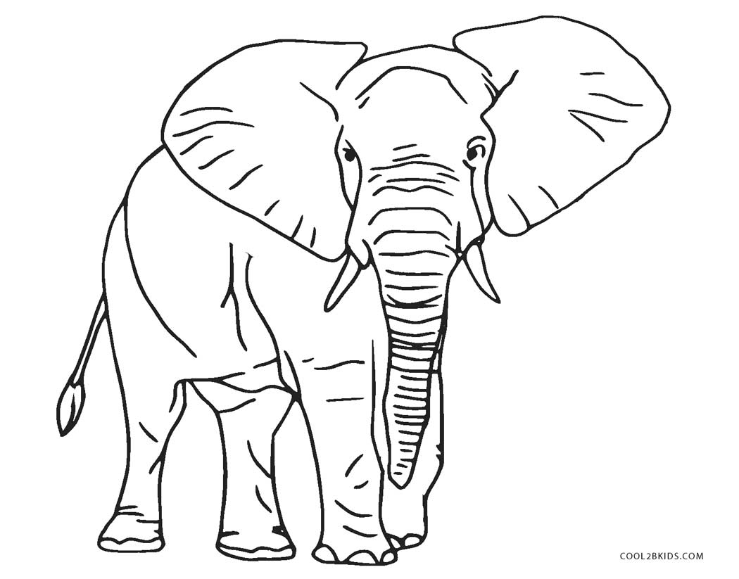 colouring picture of elephant free printable elephant coloring pages for kids elephant of picture colouring