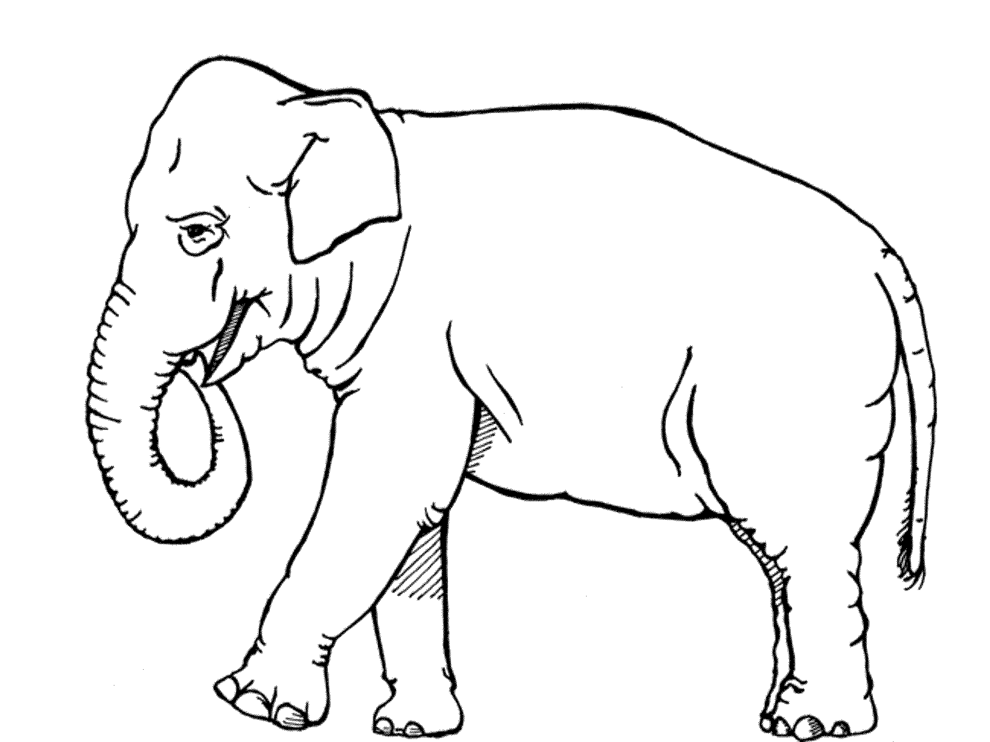 colouring picture of elephant print download teaching kids through elephant coloring elephant of picture colouring