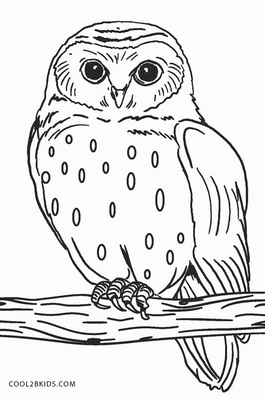 colouring picture of owl birds coloring pages cool2bkids owl colouring of picture