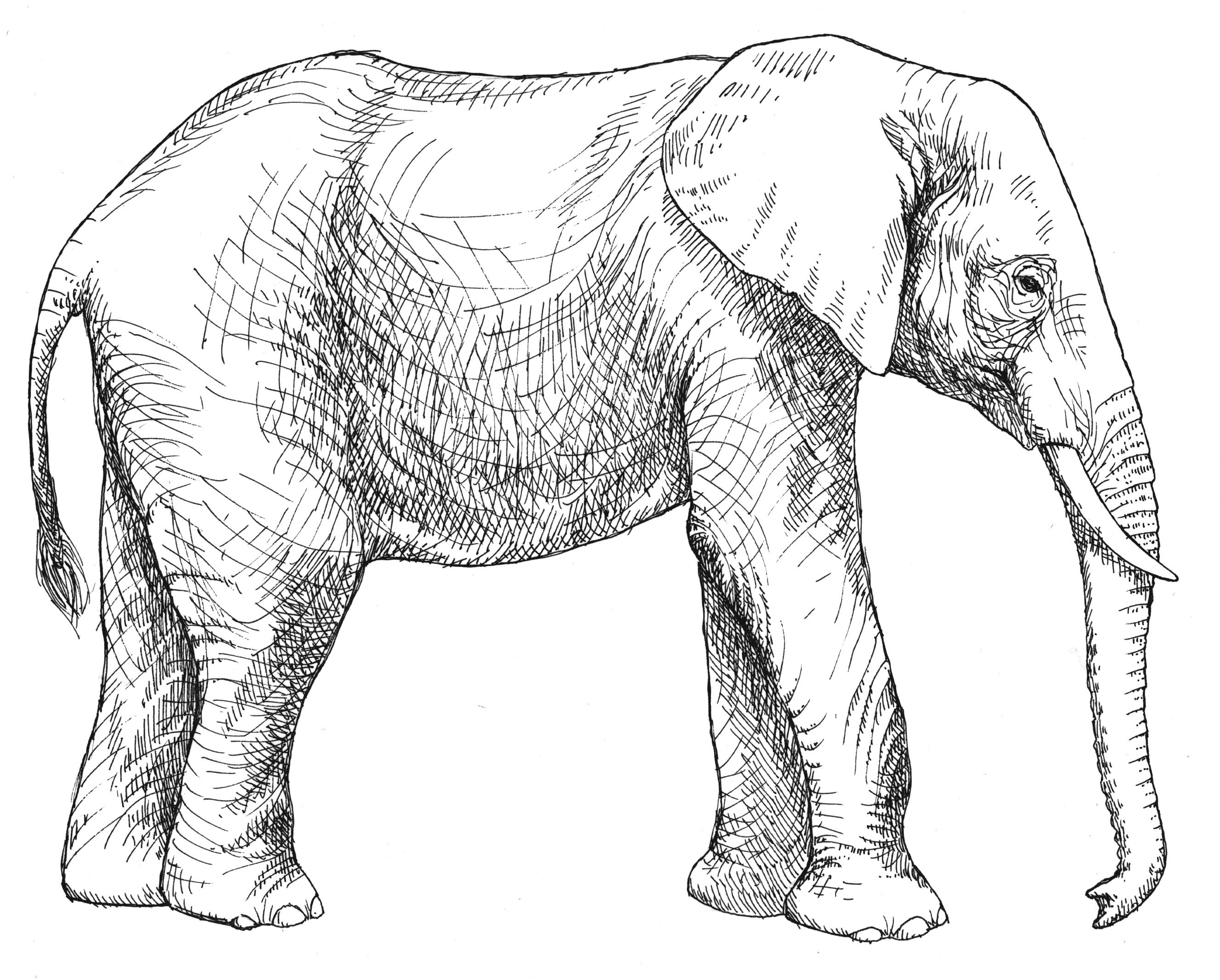 colouring pictures of elephant elefante animales páginas para colorear elephant colouring pictures of