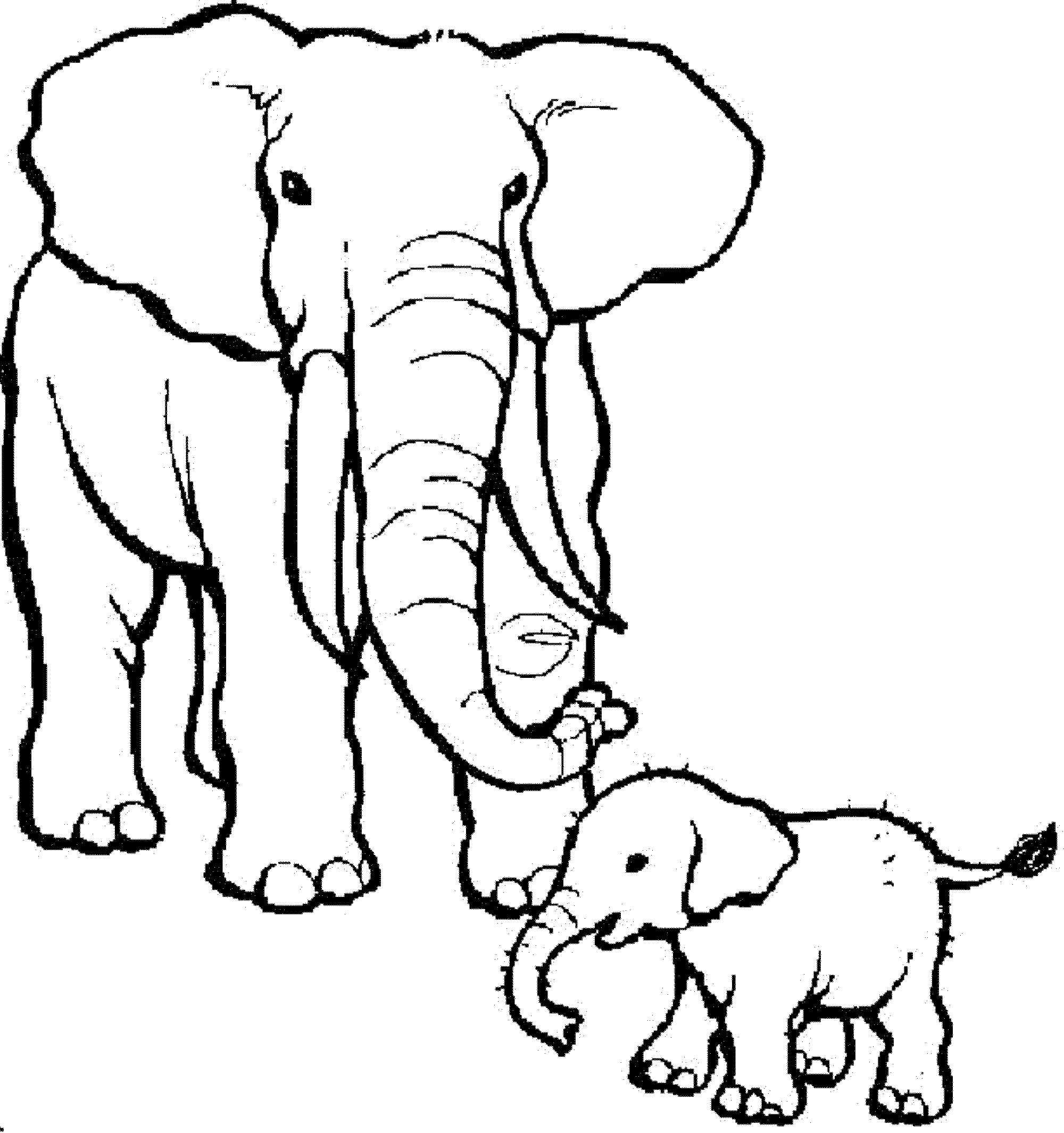 colouring pictures of elephant print download teaching kids through elephant coloring of pictures elephant colouring