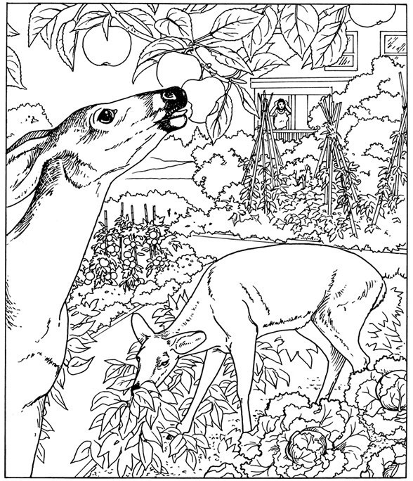 colouring pictures of nature free printable nature coloring pages for kids best pictures colouring of nature