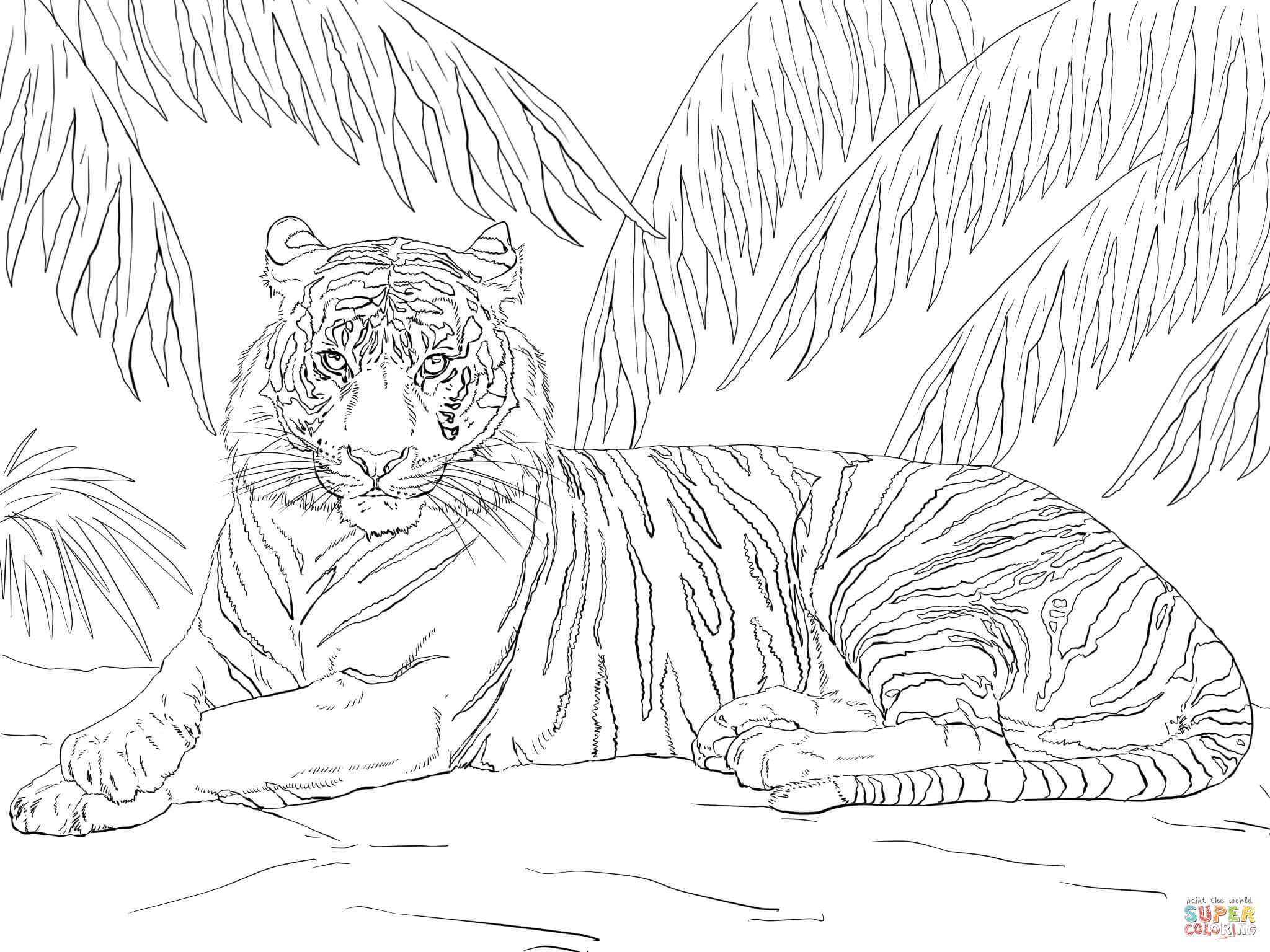 cool tiger coloring pages awesome small cute tiger coloring page pyssel pages cool coloring tiger