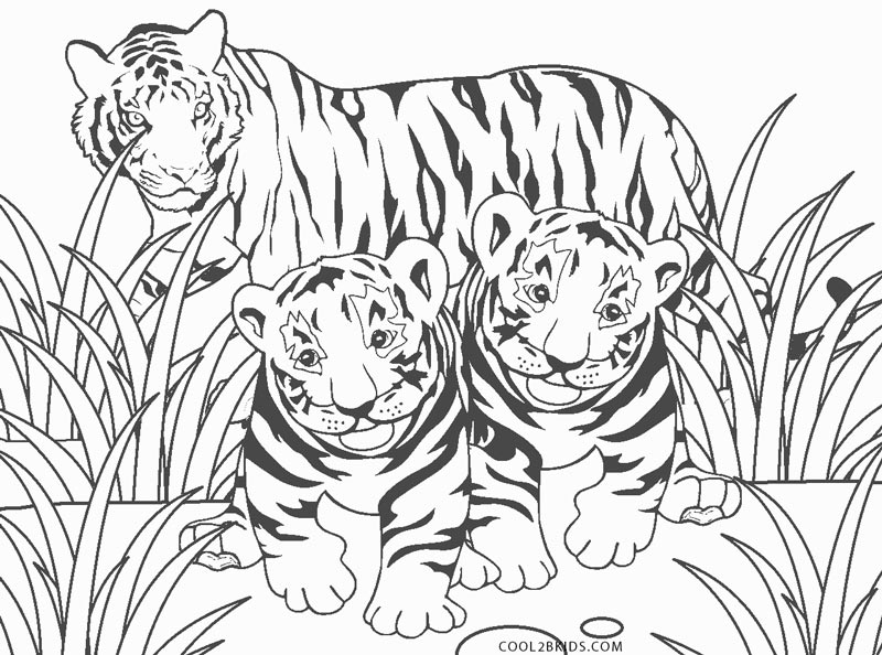 cool tiger coloring pages cool tigers coloring page coloring pages adult coloring coloring tiger cool pages