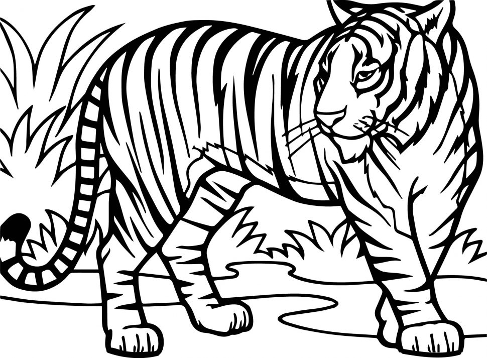cool tiger coloring pages free printable tiger coloring pages for kids pages tiger cool coloring 1 1
