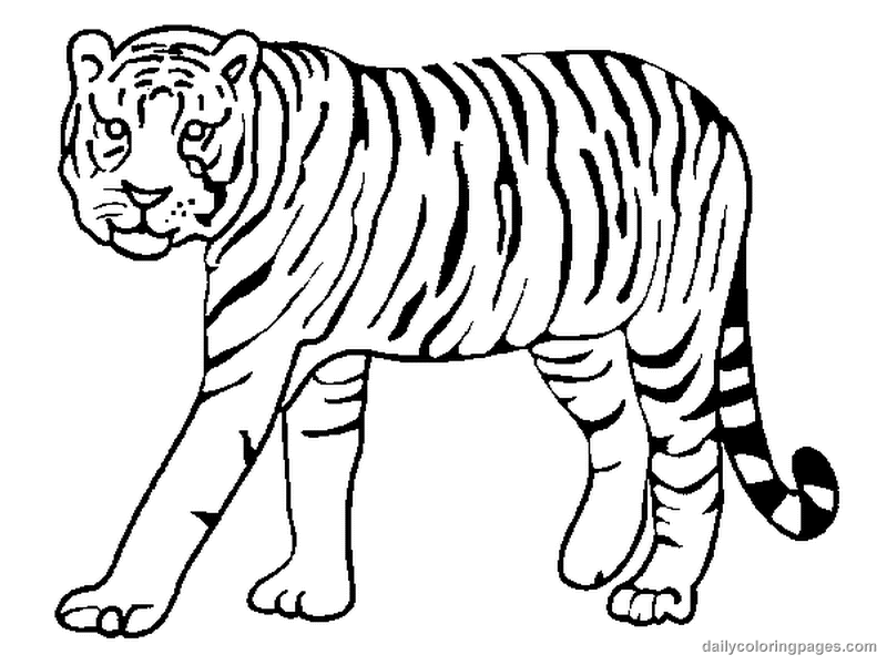 cool tiger coloring pages free printable tiger coloring pages for kids tiger coloring pages cool