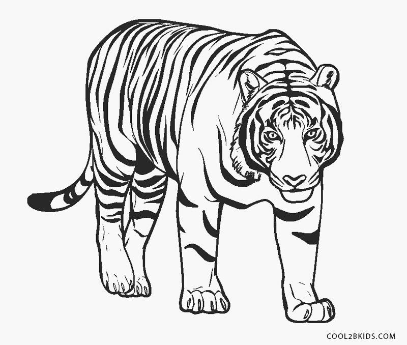 cool tiger coloring pages tiger drawing cartoon at getdrawings free download coloring cool tiger pages