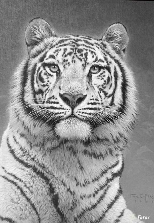cool tiger coloring pages tiger fearless on behance geometric design art tiger pages tiger cool coloring