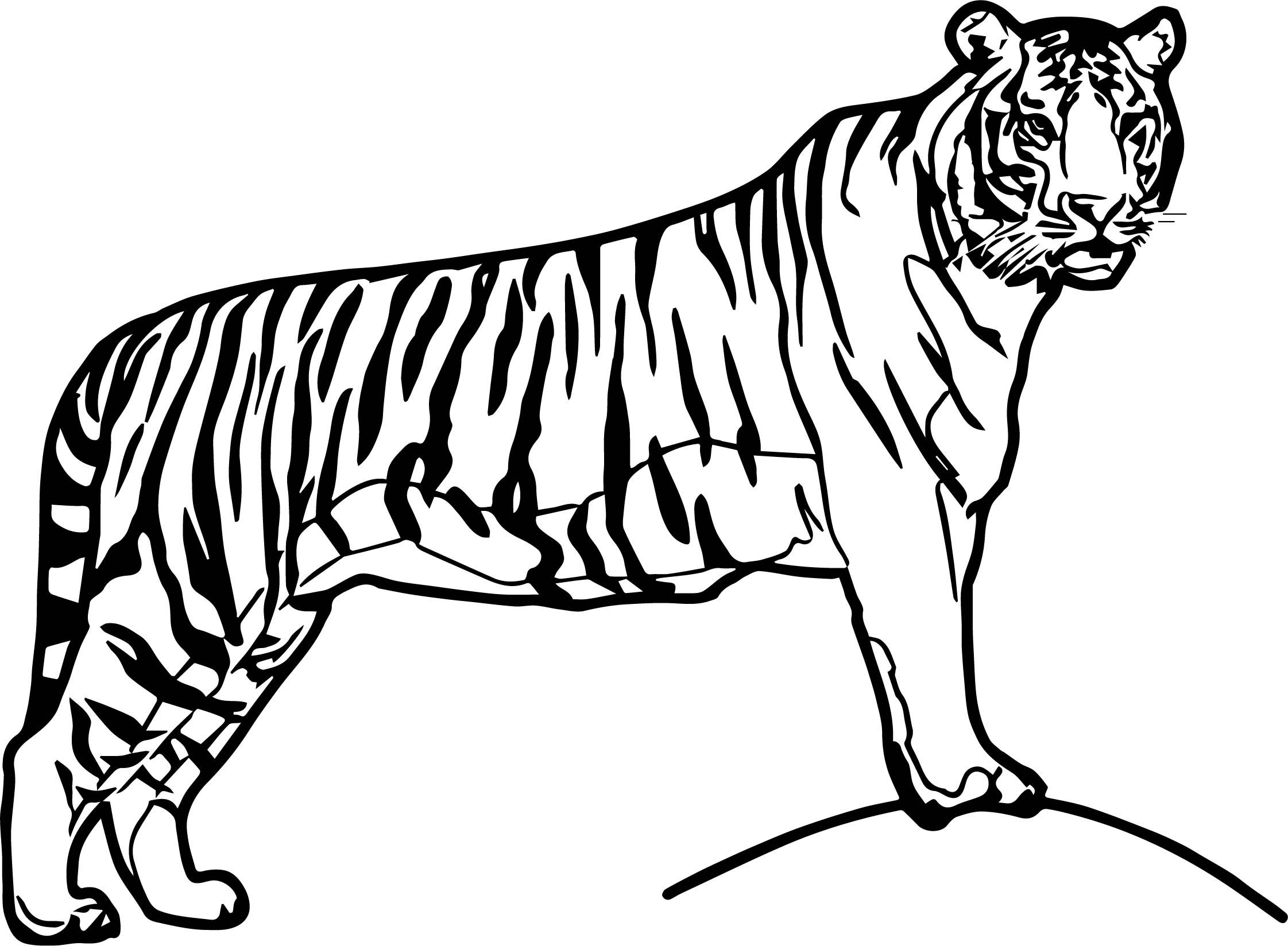 cool tiger coloring pages tigers coloring pages coloring kids coloring kids pages coloring cool tiger