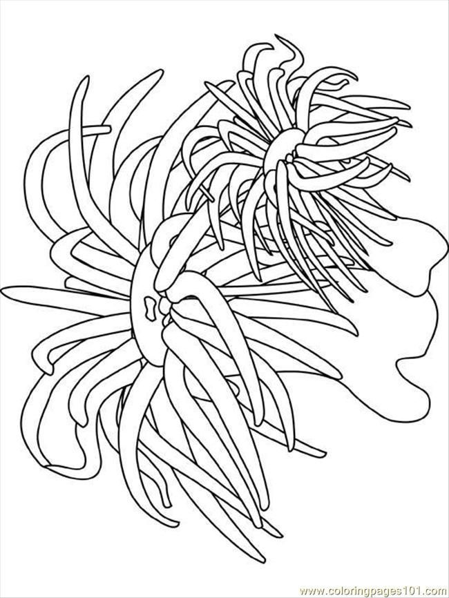 coral coloring pages coral basic coloring pages print coloring 2019 pages coral coloring