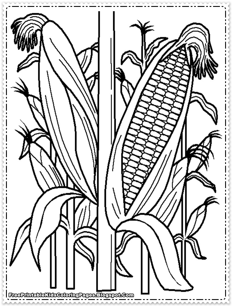 corn stalk coloring sheet corn coloring pages printable free printable kids corn coloring stalk sheet
