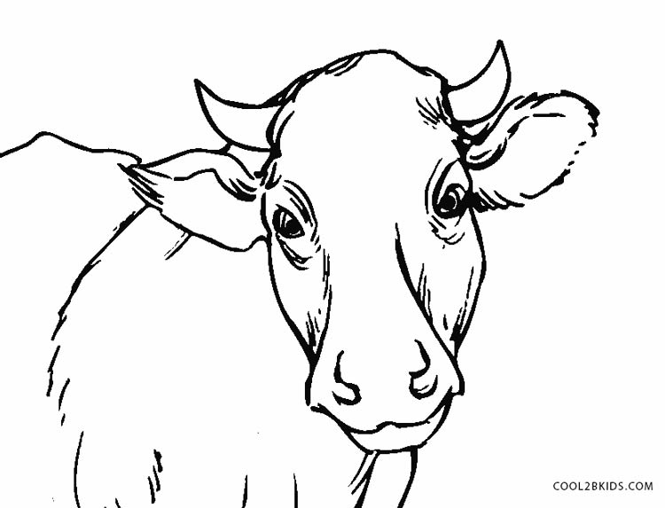cow head coloring page cow drawing pictures at getdrawings free download head page coloring cow