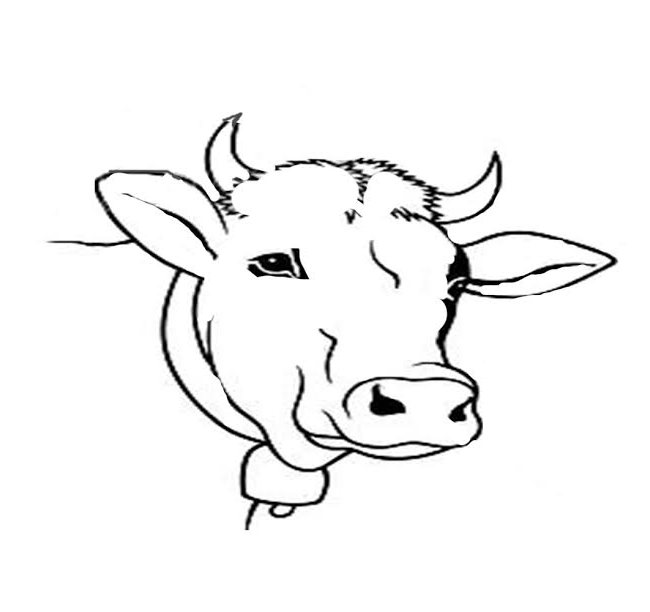 cow head coloring page cow head coloring page at getcoloringscom free coloring cow head page