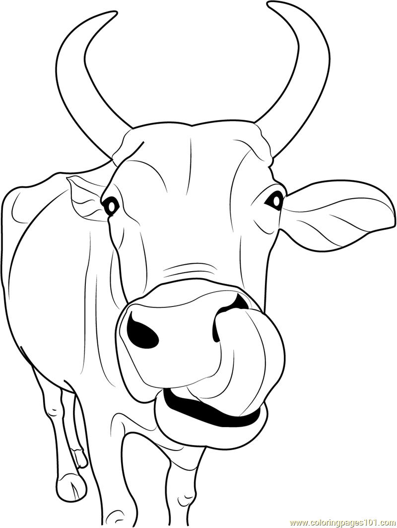 cow head coloring page indian cow face coloring page free cow coloring pages cow page head coloring
