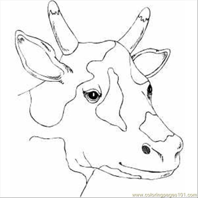 cow head coloring page spotty cow head coloring page free cow coloring pages coloring page head cow