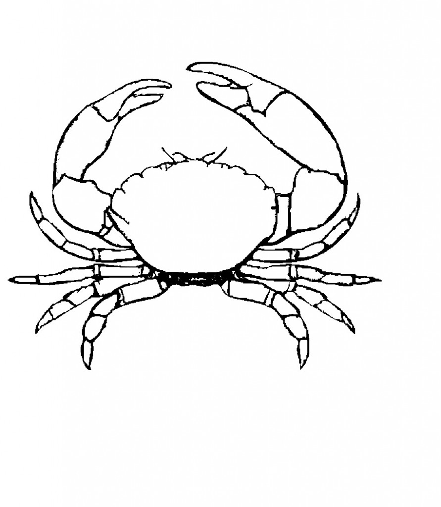 crab coloring pages free crab coloring page image animal place crab free pages coloring