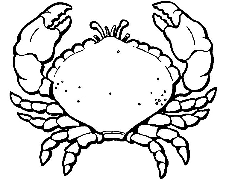 crab coloring pages free crab coloring pages kidsuki coloring crab free pages