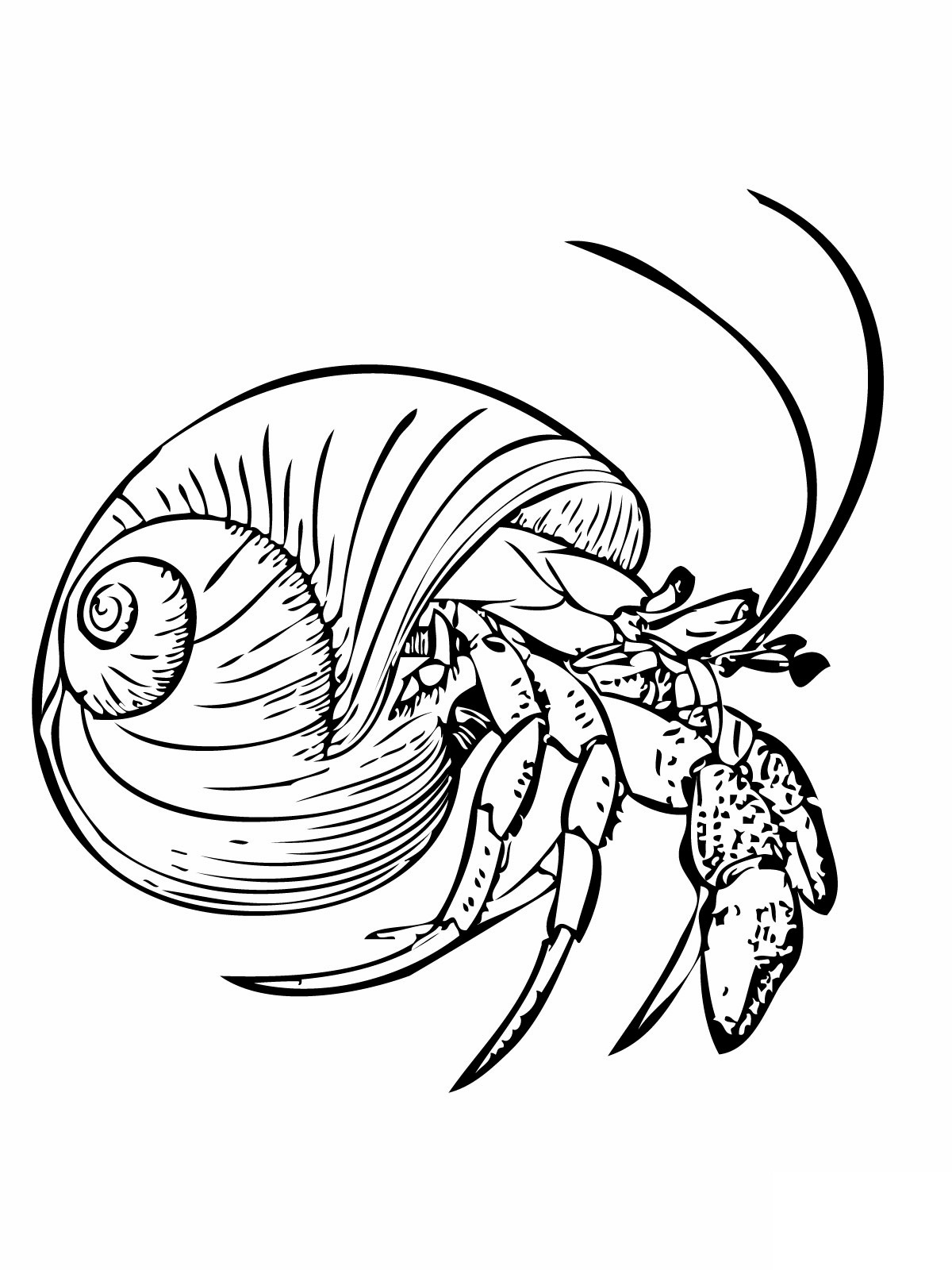 crab coloring pages free crab coloring pages pages crab free coloring