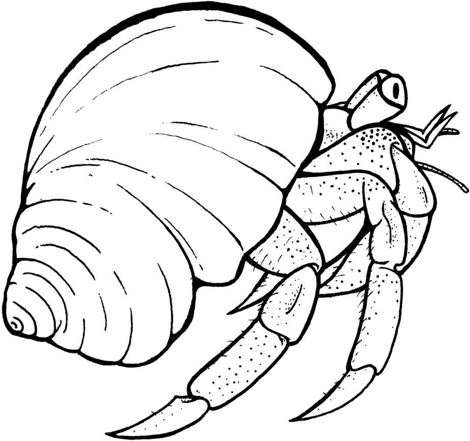 crab coloring pages free free printable hermit crab coloring pages for kids crab pages coloring free
