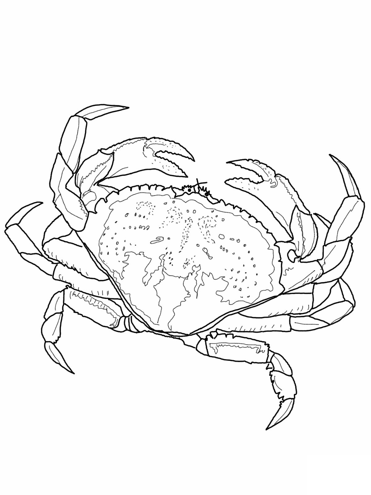 crabs coloring pages crabs coloring pages coloring crabs pages