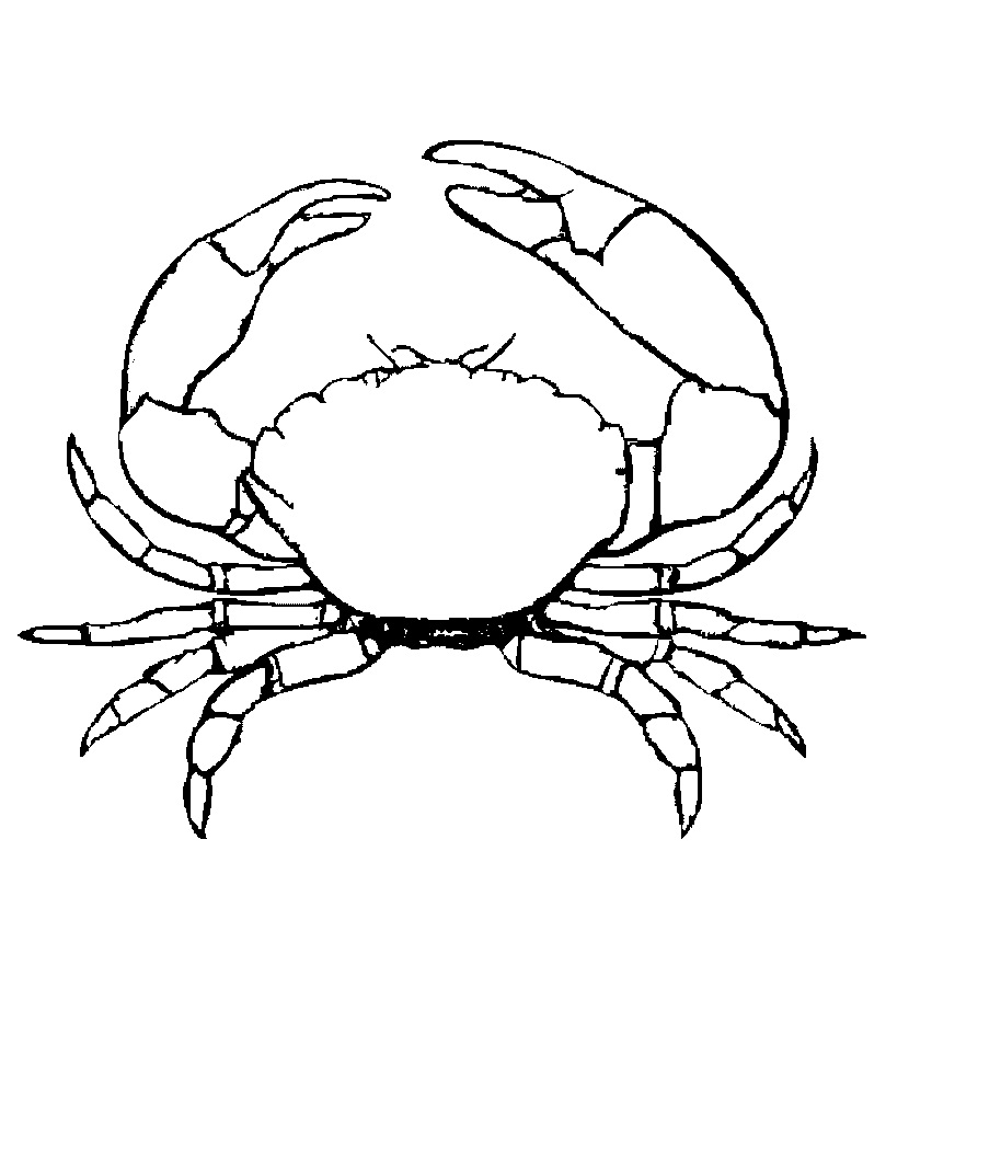 crabs coloring pages simple crab drawing at getdrawings free download crabs pages coloring