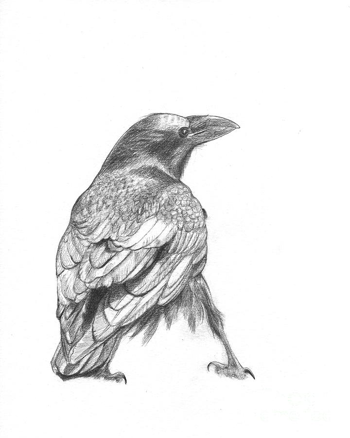crow head drawing 42 amazing crow tattoos designs and pictures ideas drawing crow head