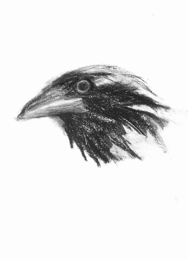 crow head drawing crow drawings raven face cawing bird crow art mouse pad crow drawing head
