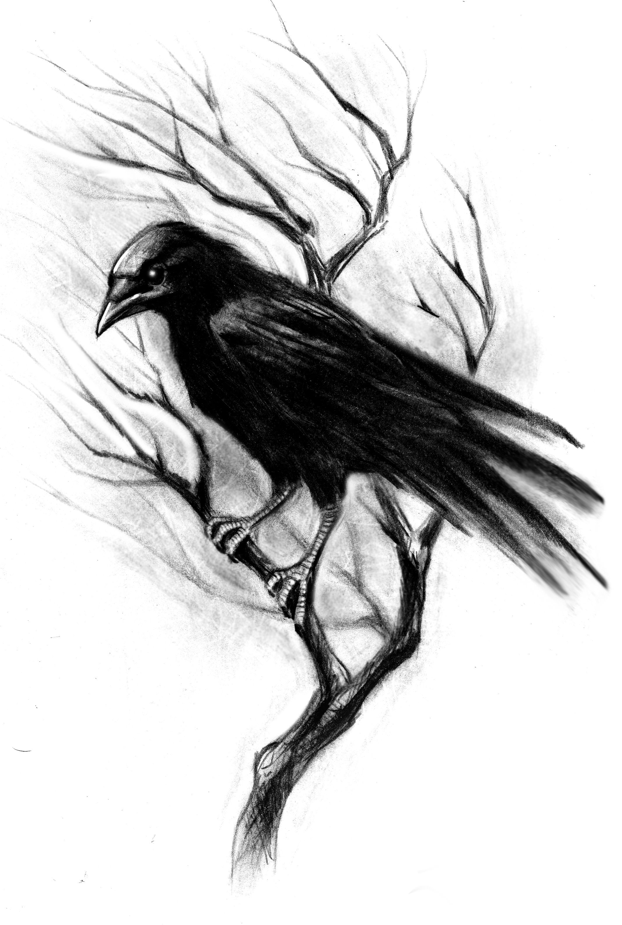 crow head drawing how to draw a realistic crow draw crows step by step crow drawing head