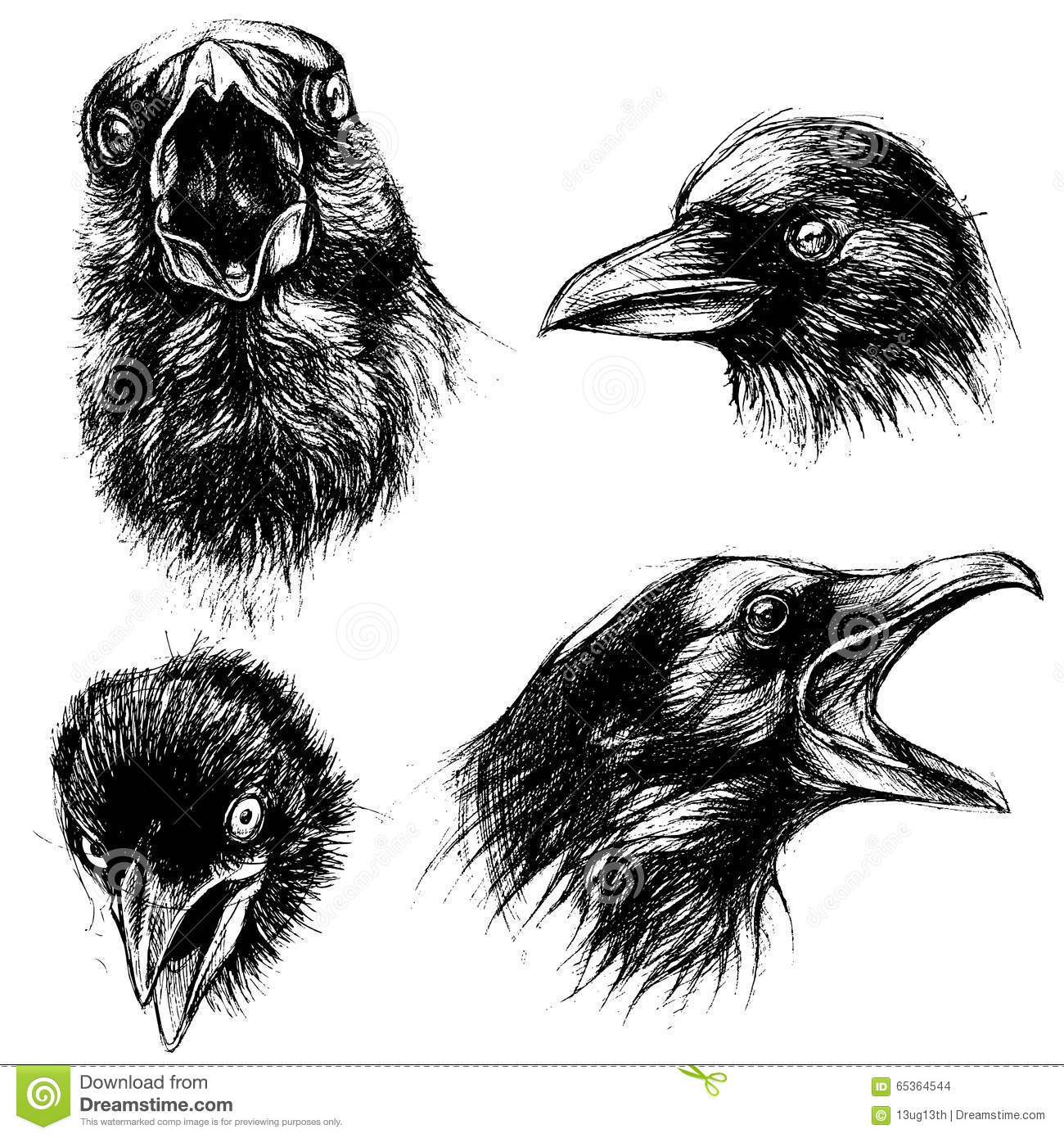 crow head drawing how to draw a realistic crow draw crows step by step drawing head crow