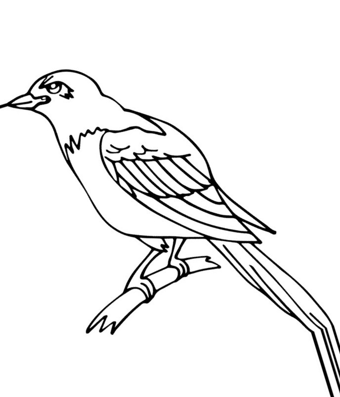 crow printable coloring pages american crow coloring page free printable coloring pages crow printable pages coloring