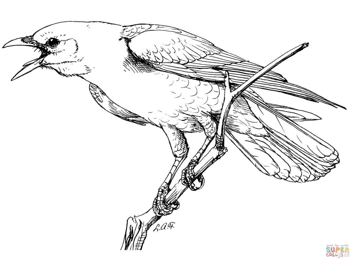 crow printable coloring pages crow coloring download crow coloring for free 2019 crow pages printable coloring