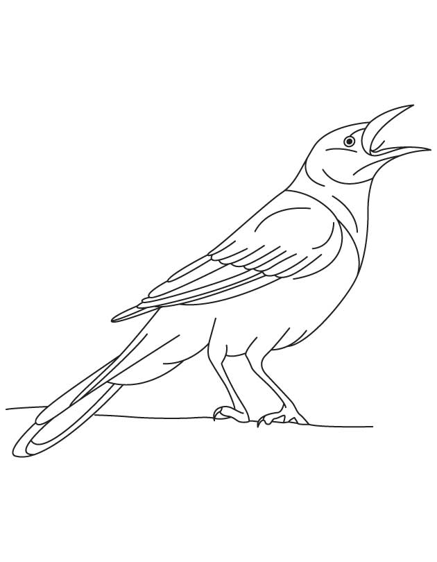 crow printable coloring pages crow coloring page coloringcrewcom printable coloring pages crow