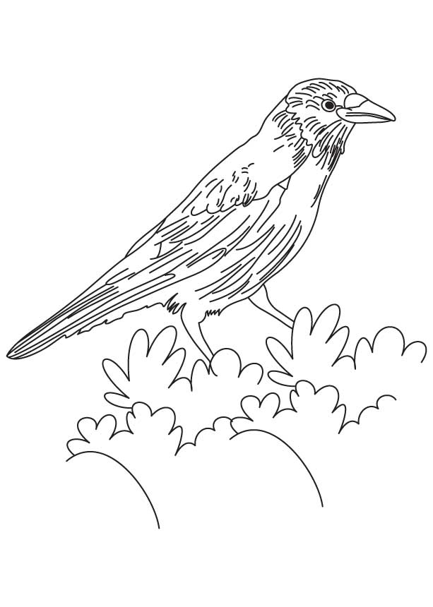 crow printable coloring pages crow coloring pages books 100 free and printable crow coloring pages printable