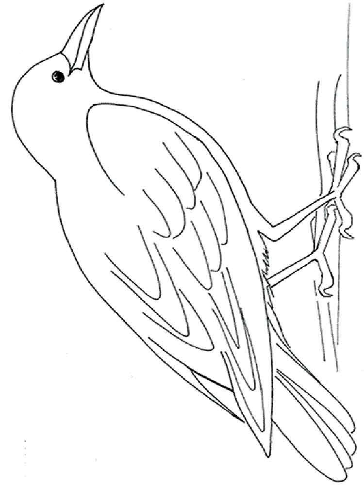 crow printable coloring pages crow coloring pages coloring pages to download and print pages coloring printable crow