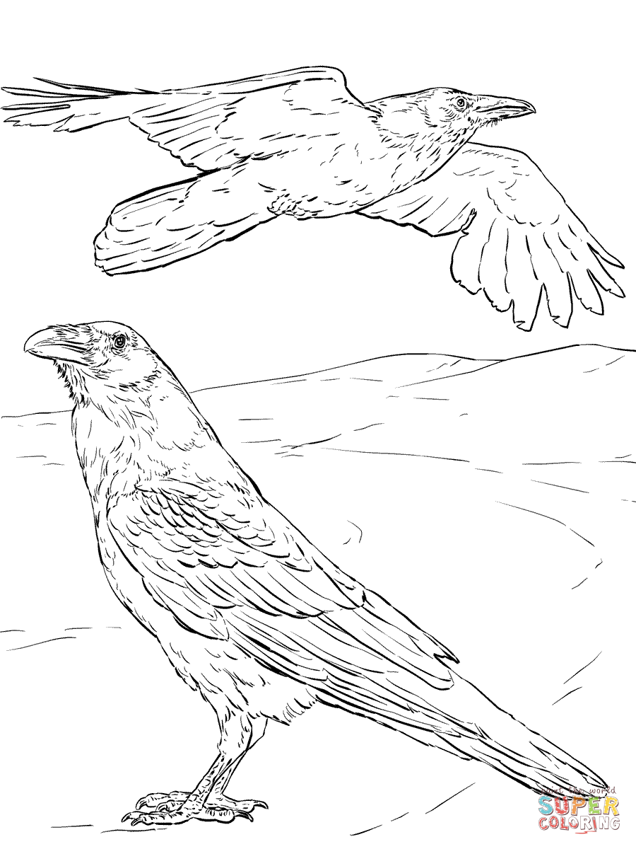 crow printable coloring pages crow coloring pages kidsuki coloring printable pages crow