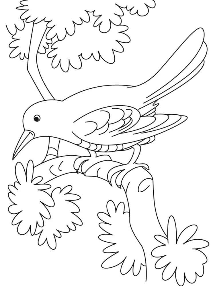 crow printable coloring pages crow coloring pages to download and print for free pages crow coloring printable