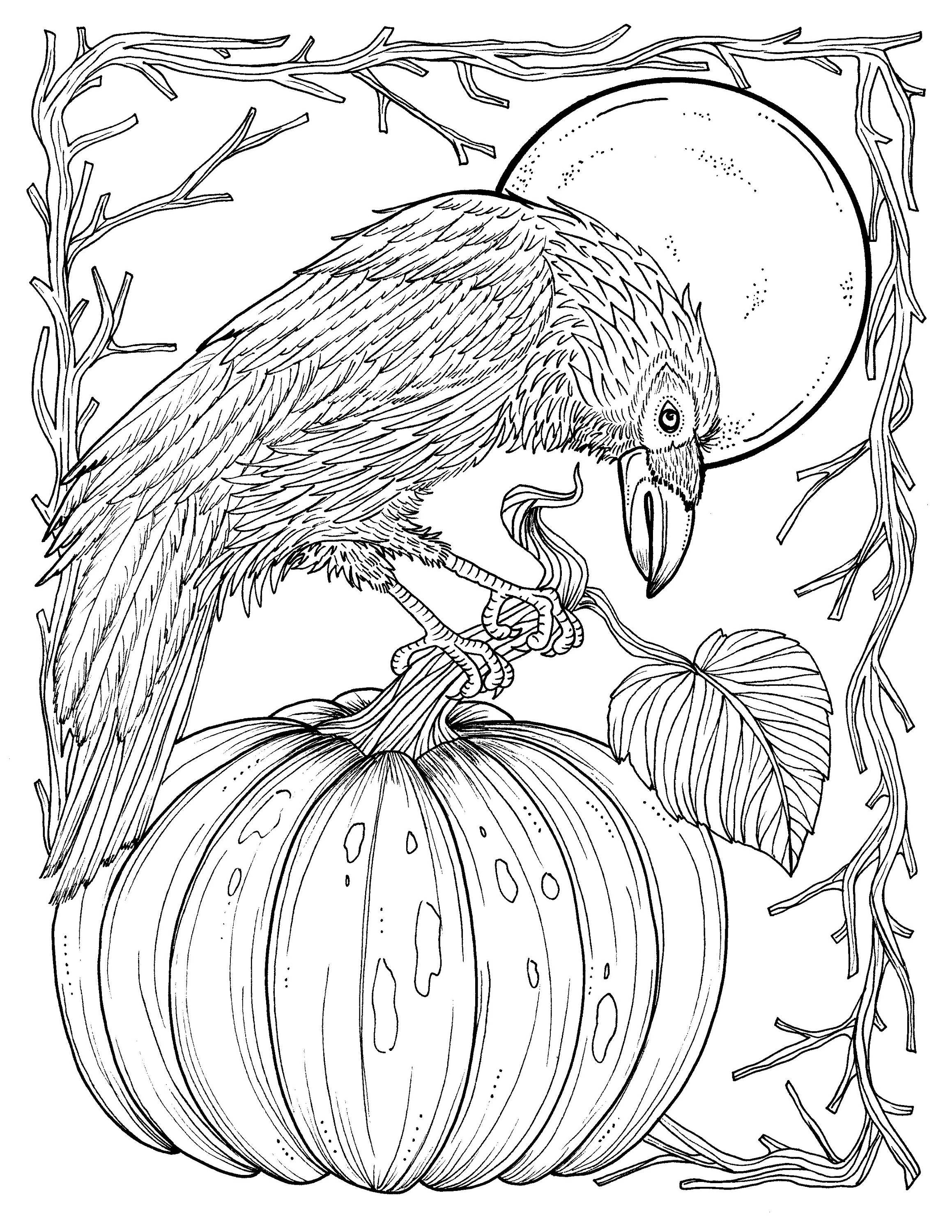 crow printable coloring pages crows coloring pages download and print crows coloring pages printable coloring crow pages