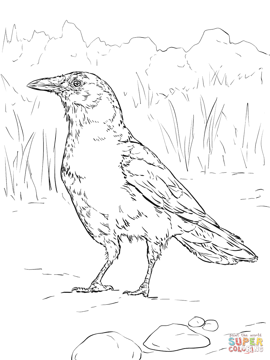 crow printable coloring pages crows coloring pages download and print crows coloring pages printable crow coloring pages