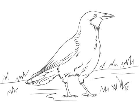 crow printable coloring pages download crow coloring for free designlooter 2020 pages coloring crow printable