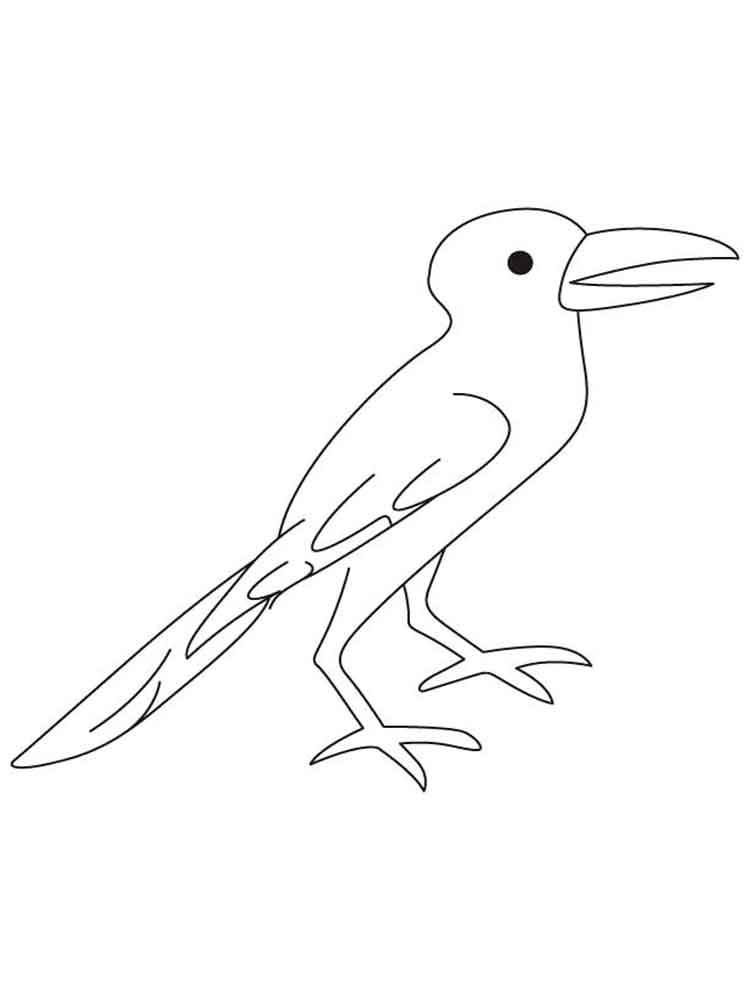 crow printable coloring pages pied crow coloring download pied crow coloring for free 2019 crow coloring printable pages
