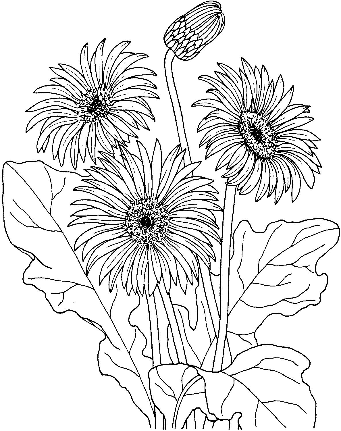 cute flower coloring pages printable flower coloring pages printable flower coloring cute flower pages
