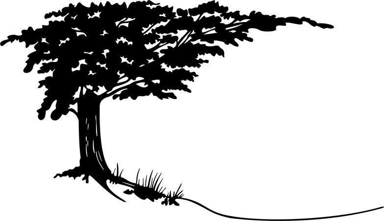 cypress tree silhouette cypress tree silhouette file png portable network silhouette tree cypress