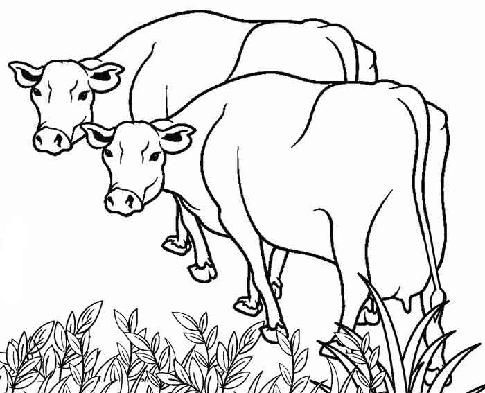 dairy farm coloring pages cow coloring page cow coloring pages farm animal dairy farm pages coloring
