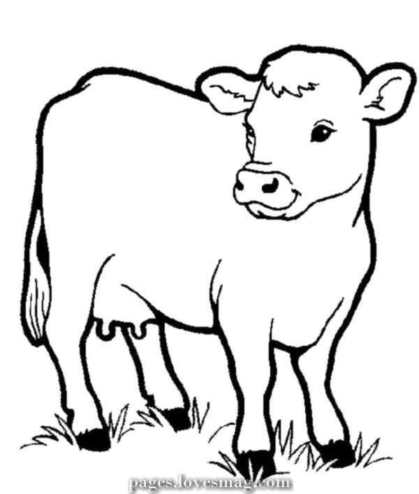 dairy farm coloring pages wholesome dairy cow on the farm animal coloring web page pages farm coloring dairy
