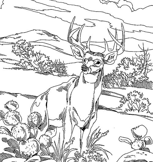 deer hunting coloring pictures hunting from top of tree coloring pages hunting from top pictures coloring deer hunting