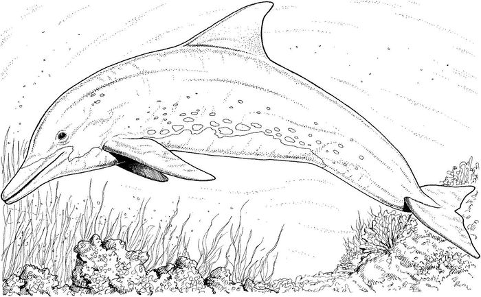 detailed dolphin coloring pages dolphin coloring pages for kids coloring dolphin detailed pages